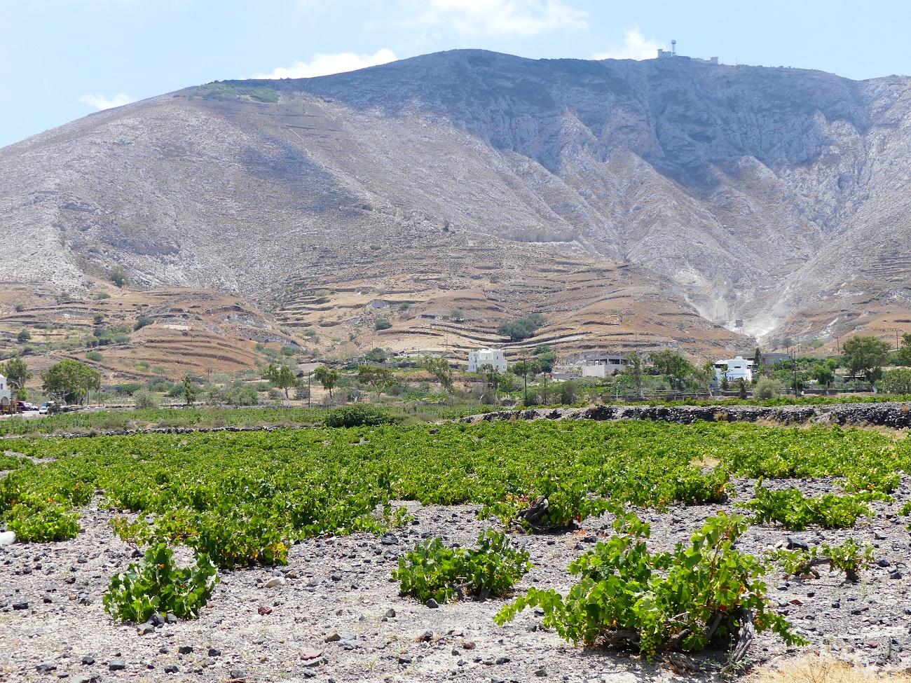 Vignobles de Santorin